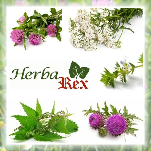 The five herbs